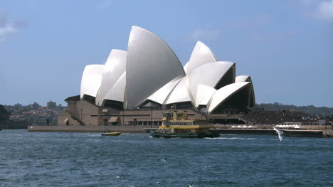 Australia-Sydney-Opera-House-With-Sea-Gulls-And-Ferry