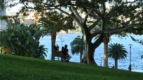 Australia-Sydney-Park-Bench-And-Harbor
