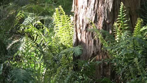Australia-Yarra-Ranges-Ferns-And-Gum-Tree-Trunk
