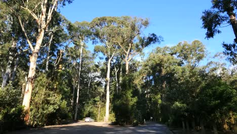 Australia-Yarra-Ranges-Gum-Forest-With-Car-For-Scale
