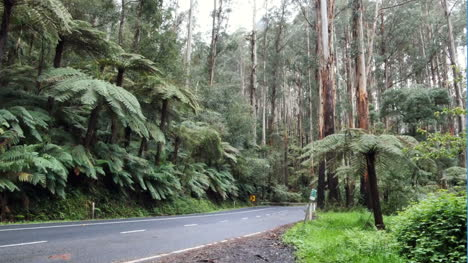 Australia-Yarra-Ranges-Road-With-Cars