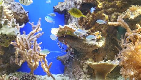Light-Blue-Fish