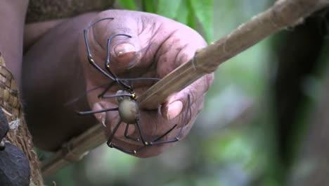 Vanuatu-Spider-On-A-Stick