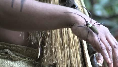 Vanuatu-Spider-On-Hand