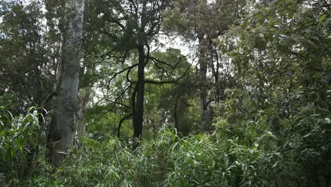 Australia-Great-Ocean-Road-Otway-Forest