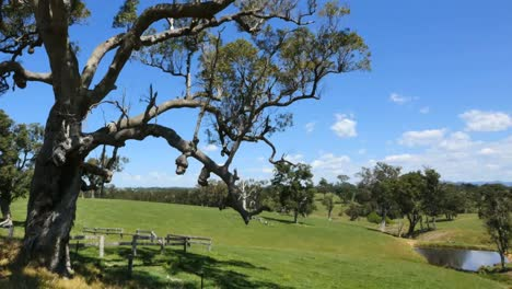 Australia-Mumbulla-Tree-And-View-Pan