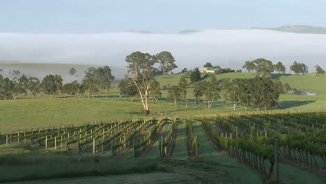 Australia-Outlook-Hill-Sun-Creeping-Up-Vineyard-Pan