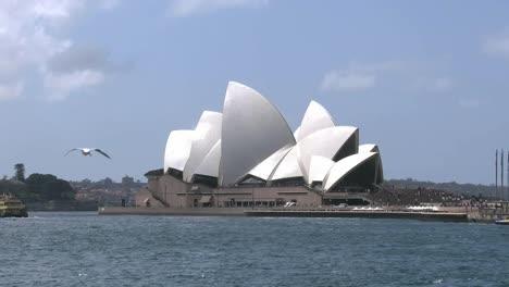 Australia-Sydney-Opera-House-And-Many-Sea-Gulls-With-Ferry-Pan