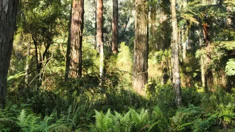 Australia-Yarra-Ranges-Gum-Forest-Trees-Pan