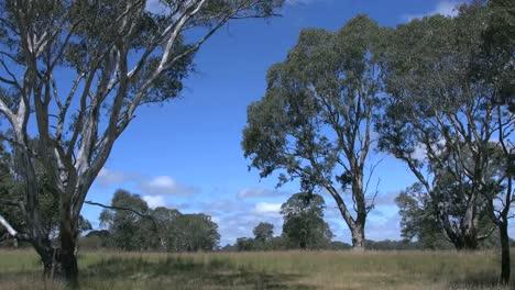 Australia-Gum-Tree-Landscape