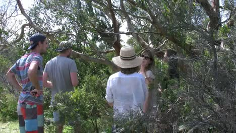 Australia-Tourist-Takes-Picture-Of-Koala-In-Tree