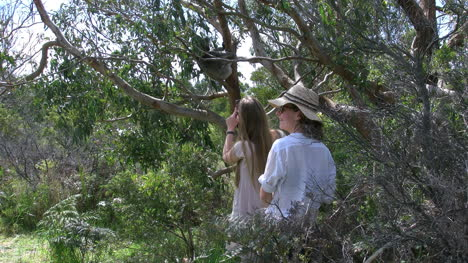 Australia-Tourists-Photographing-Koala-In-Tree