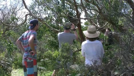 Australia-Tourists-Watching-Koala-In-Tree