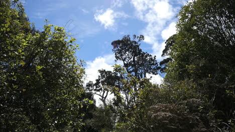 New-Zealand-Catlins-Podocarp-Forest-Trees