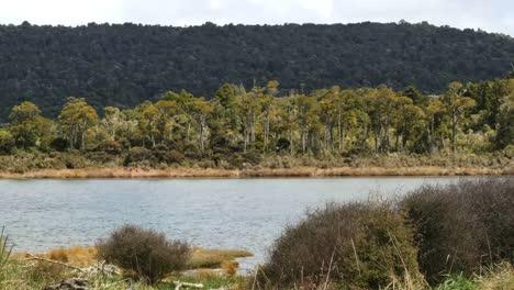 New-Zealand-Catlins-Tahakopa-River-And-Podocarp-Forest