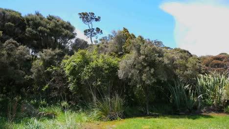New-Zealand-Catlins-Podocarp-Forest