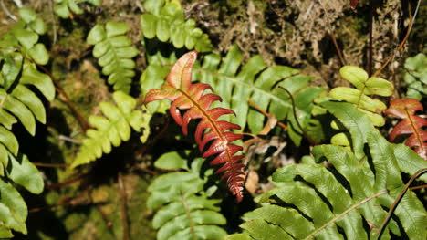New-Zealand-Fiordland-National-Park-Ferns