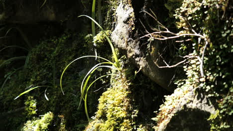 New-Zealand-Fiordland-National-Park-Grass-And-Moss