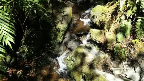 New-Zealand-Fiordland-National-Park-Tiny-Stream