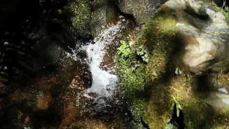 New-Zealand-Fiordland-National-Park-Tiny-Waterfall