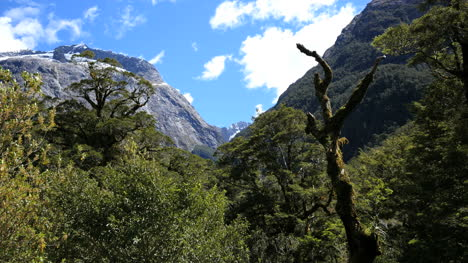 New-Zealand-Fiordland-Dead-Tree-In-Forest
