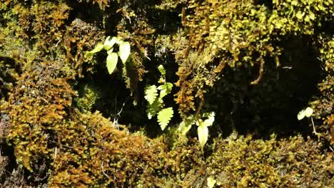 New-Zealand-Fiordland-Fern-And-Moss