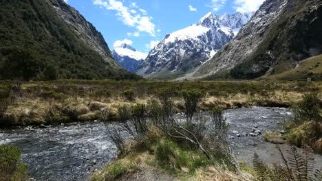 New-Zealand-Fiordland-River-Flows-Past-Bush