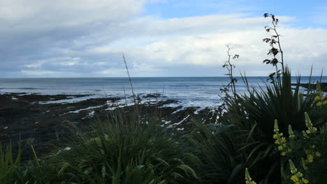 New-Zealand-Kaka-Point-Flowers-And-Tide-Pools