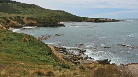 New-Zealand-Shag-Point-View-Of-Coast