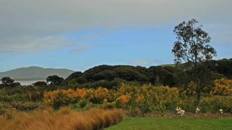 New-Zealand-Waikawa-Bay-Brown-Grass-Slight-Drizzle