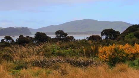 New-Zealand-Waikawa-Bay-Grass-And-Shrubs-In-Rain