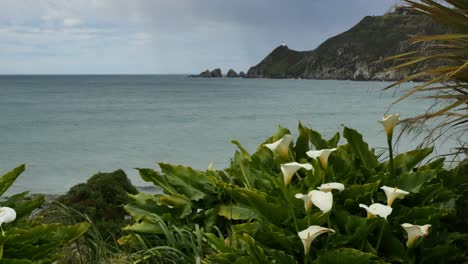 New-Zealand-Lilies-And-Nugget-Point-Lighthouse-Mov