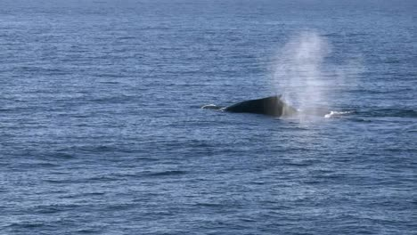 New-Zealand-Whales-Slow-Motion