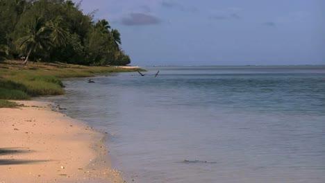 Aitutaki-Birds-Flying-Over-Lagoon