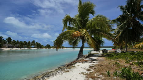 Aitutaki-Crooked-Palm-By-Channel-To-Lagoon