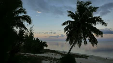 Aitutaki-Early-Morning-With-Chickens-On-Beach
