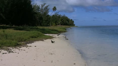 Aitutaki-Morning-Three-Birds-Stand-By-Lagoon-And-One-Flying