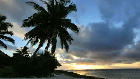 Aitutaki-Palm-In-Evening-With-Sun-Behind-Cloud