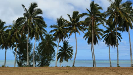 Aitutaki-Palms-Stand-In-A-Row-By-A-Lagoon