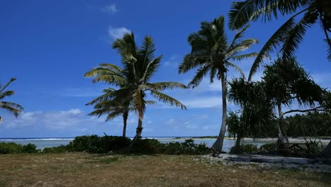 Aitutaki-Palms-Under-Blue-Sky-By-Channel-To-Reef