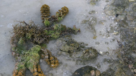 Aitutaki-Seaweed-And-Leaf