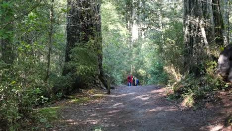 California-Redwood-National-Park-Lady-Bird-Johnson-Grove-Groups-Of-People-On-Path