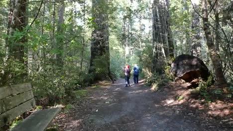 California-Redwood-National-Park-Lady-Bird-Johnson-Grove-People-On-Path