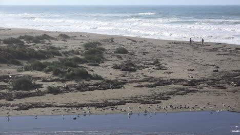 California-Salmon-Creek-Birds-And-People-On-Beach