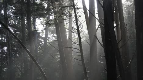 California-Woods-With-Sunlight