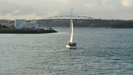 New-Zealand-Auckland-Bay-Sailboat-With-Bird