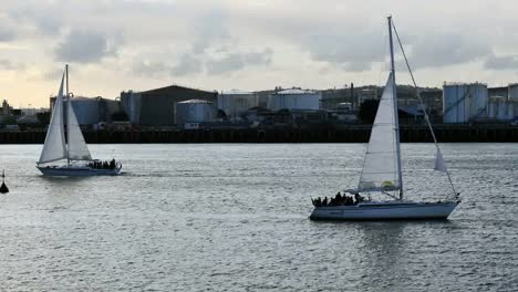 New-Zealand-Auckland-Bay-Sailboats-Passing