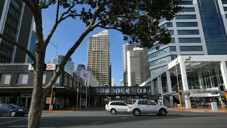 New-Zealand-Auckland-Tree-Over-Street-With-Cars