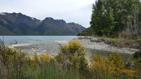 New-Zealand-Creek-Der-Von-Besen-Gesäumt-Wird-Tritt-In-Den-See-Ein