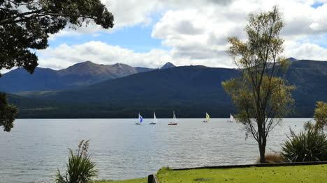 New-Zealand-Lake-Te-Anau-Trees-Frame-Lake